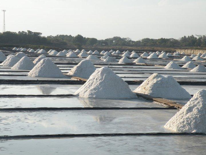 maya sea salt