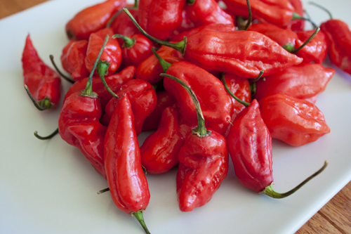 King-Naga-Chili-Pepper