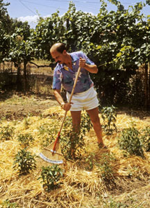 Dave in his chile garden back in the day.
