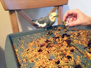 chirpy-with-red-chile-pods