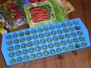 icecubetray_seed-300x225