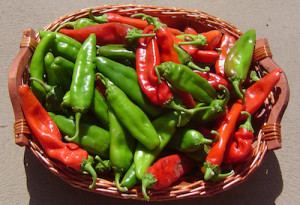 new mexico chile peppers