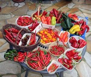 harvest2005hz_small (1)