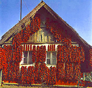 paprika-house-in-kalocsa