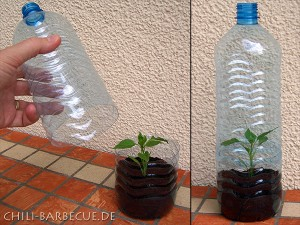 bottle_greenhouse-300x225