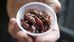 Toasted chili and lime grasshoppers.