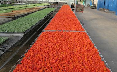 ashley food company wholesale