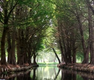A channel between chinampas